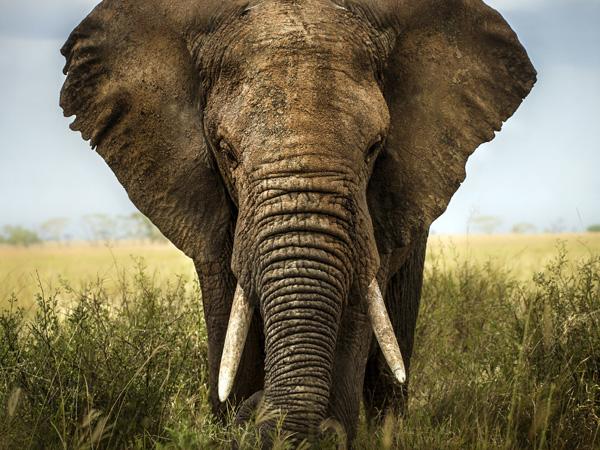 Bangalore Luxury Travel - Wildlife of North India Tour - Luxury Tours - Indian Wildlife Tour